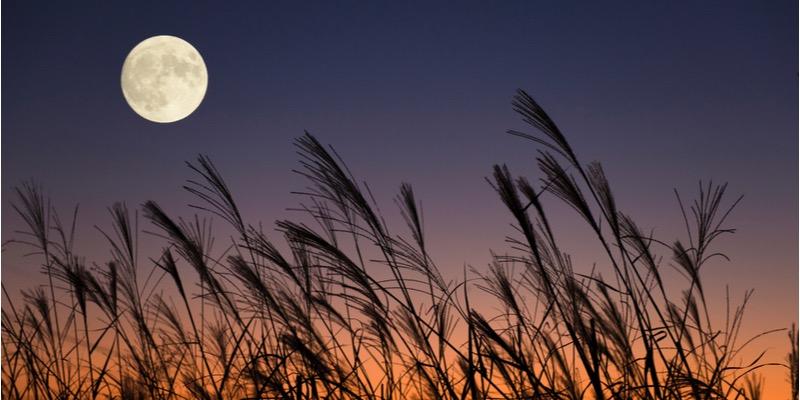 中秋の名月とはどんな日? 満月との違い・食べ物・2020年はいつなの ...
