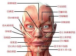 だから顔の筋肉(表情筋)はたるみやすい!! | 豊橋「たるみ」に特化 ...