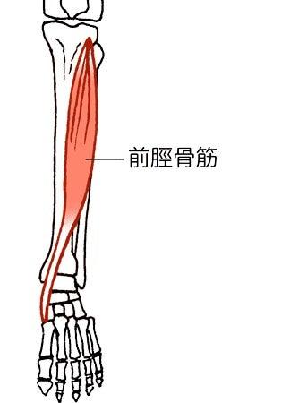前脛骨筋と骨膜炎の炎症 | 健康おじじ50歳からトライアスロン