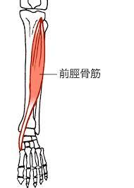 前脛骨筋と足首   世界を知る!足つぼマニアno@京都たになかちよの ...