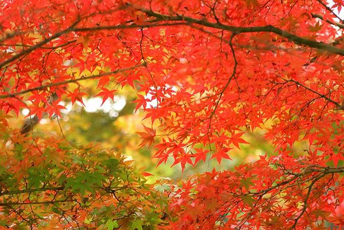 紅葉」の画像・写真素材を無料ダウンロード(1)フリー素材 BEIZ images