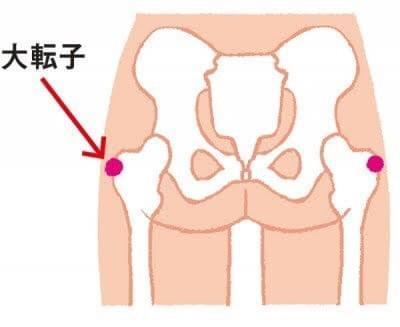 下半身太りの原因は「大転子」だった - 下半身太り トレーニング 歪み