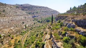 パレスチナ、オリーブとワインの地-エルサレム南部バティールの文化的 ...