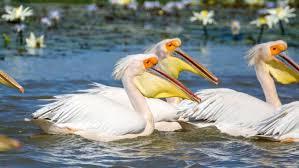 300万羽の渡り鳥が飛来する世界遺産ジュッジ国立鳥類保護区 ...