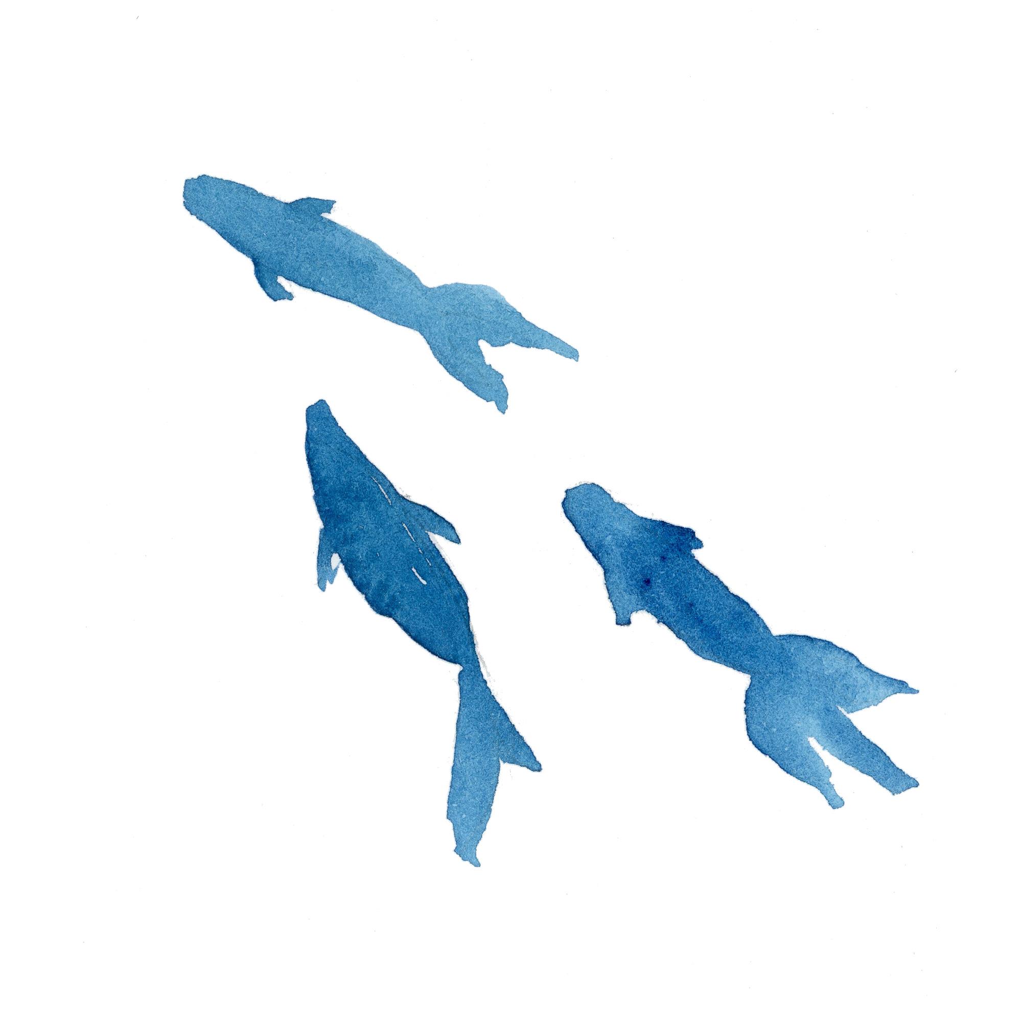 金魚|Sui-Sai|水彩画イラストフリー素材集