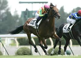 ハシルヨミテテ | 競走馬データ - netkeiba.com