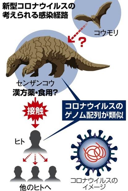 新型コロナ媒介説も ポケモンと密輸で知られる野生動物:朝日新聞デジタル