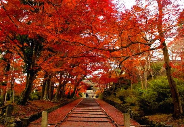 京都・散りもみじの名所で、過ぎゆく秋を見送る | 朝日新聞デジタル ...