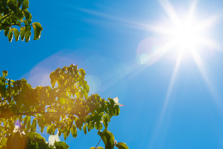 初夏の日差し | 無料の高画質フリー写真素材 | イメージズラボ
