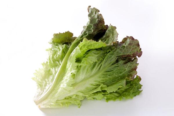サニーレタス 野菜 無料画像 フリー写真素材 「花ざかりの森」