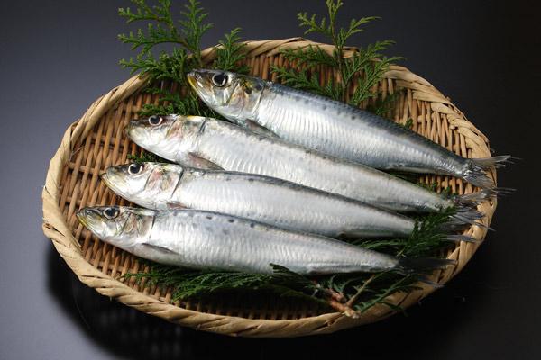 イワシ 魚 画像 無料写真素材 フリー「花ざかりの森」