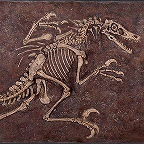 Amazon.co.jp: FRP恐竜オブジェ ヴェロキラプトルの化石 置物 白亜紀 ...
