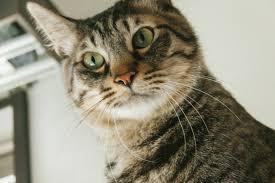 猫もビックリの写真を無料ダウンロード(フリー素材) - ぱくたそ