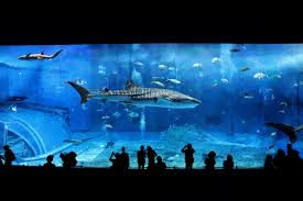水族館を優雅に泳ぐジンベィザメの写真|フリー素材は「ぱくたそ」写真 ...