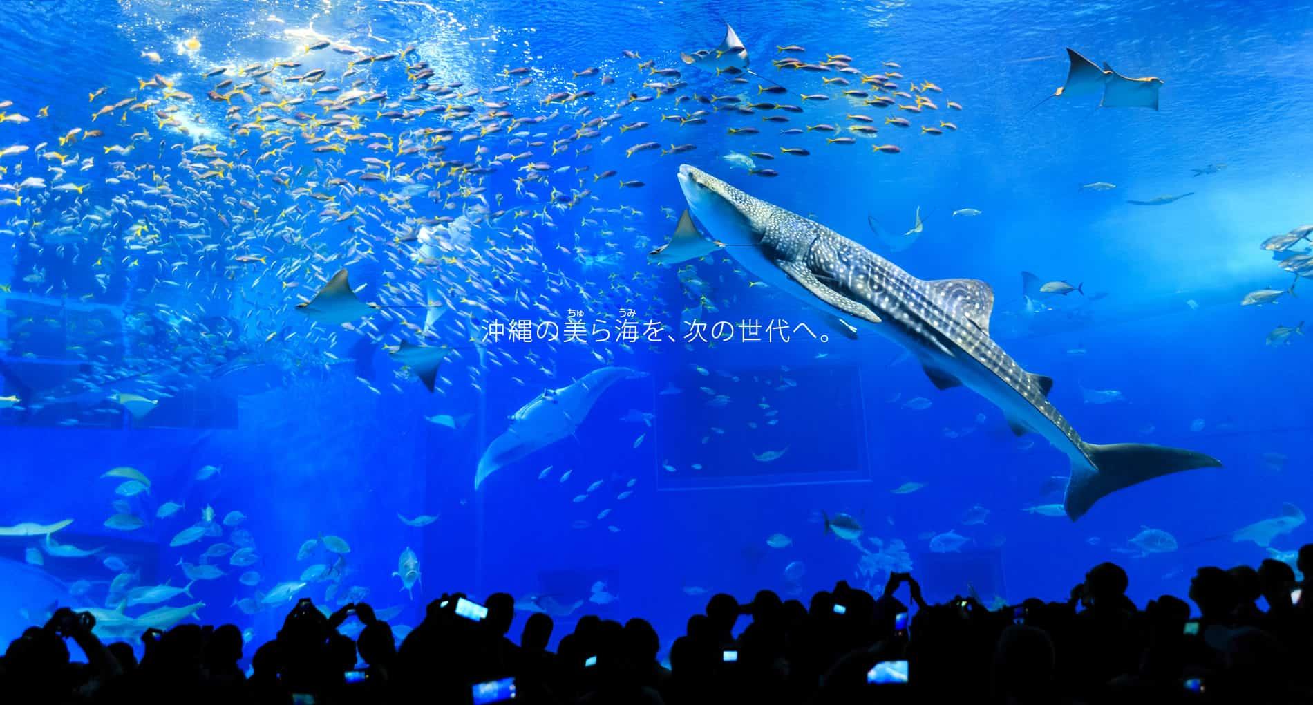 沖縄美ら海水族館 - 沖縄の美ら海を、次の世代へ。-