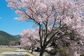 4月といえば】日本の伝統行事・食べ物・風物詩【歳時記】 | ORIGAMI ...