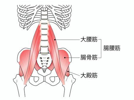 腸腰筋イラスト/無料イラストなら「イラストAC」