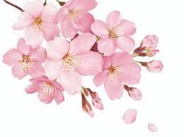 桜の絵イラスト/無料イラストなら「イラストAC」