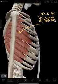 ガチガチの肩こりを改善する「前鋸筋リリース」 :理学療法士 安部元隆 ...