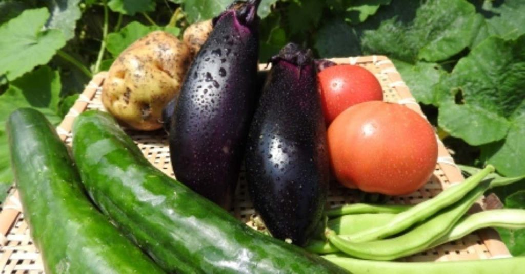 謎の説「体を冷やす食べ物・温める食べ物」管理栄養士が解説