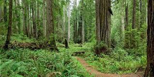 Spotlight: レッドウッド国立州立公園   Visit California