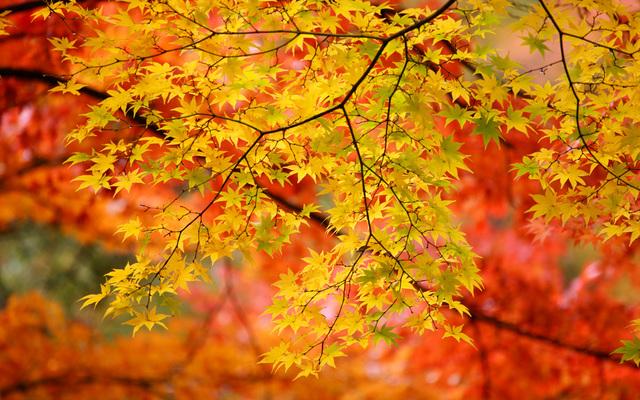 広島で紅葉みるならここ!宮島など人気スポットや見頃をリサーチ ...