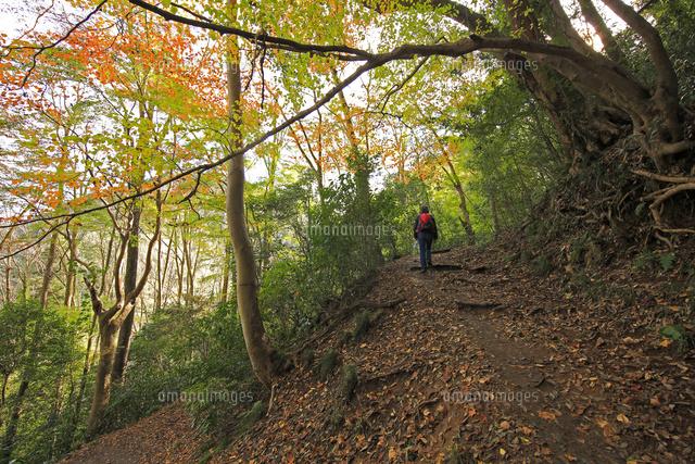 秋の登山コース6号路とハイカー[02701012564]の写真素材・イラスト素材 ...