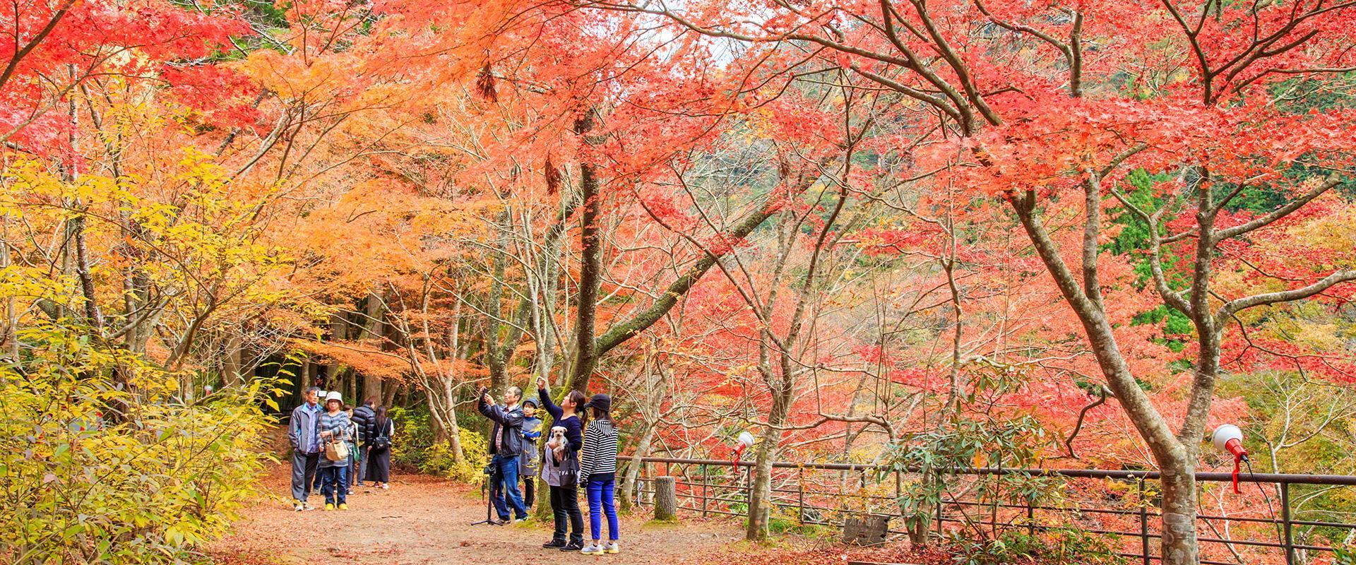 岡山で絶対見ておくべき紅葉スポット10選|旬のおすすめ-特集 ...