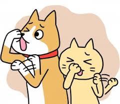 犬、猫の臭い(体臭・口臭)対策【動物看護師執筆コラム】