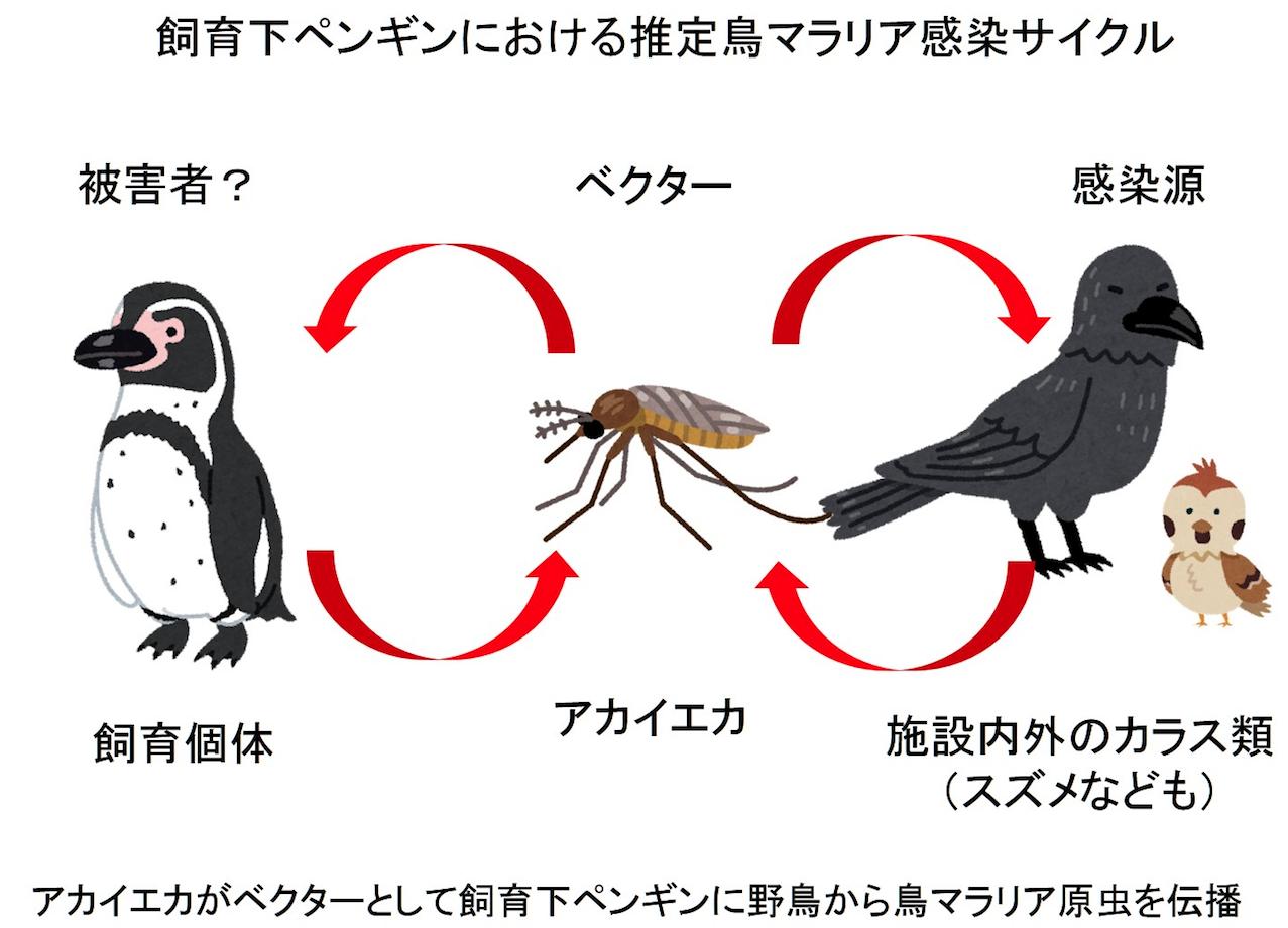 第19章 病原体とともに空を飛ぶ運搬者:遺伝子から鳥類の感染症を ...