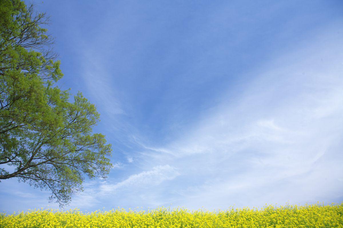気分爽快な日 | 自然・風景 > 空・雲 | GANREF