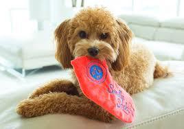 どうして犬は飼い主の靴下が大好き? いたずらワンコの問題解決に驚き ...