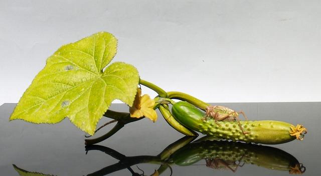 安藤緑山 ‥ ハイパーリアリズム 超絶技巧の牙彫美 : 心の時空