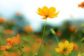 保存版 秋の花図鑑】秋の『お花の写真』と『花言葉』を紹介したミニ ...