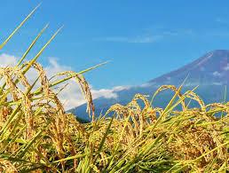 ジブン農業 - 自分らしい「農」のカタチ、見つかる。仕事にする。