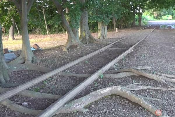 伝説の廃線「西武安比奈線」を歩く 列車来ぬまま57年 木の根で浮いた ...