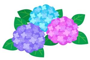 無料】紫陽花(あじさい)のイラスト素材【フリー】 | じゃぱねすくライフ