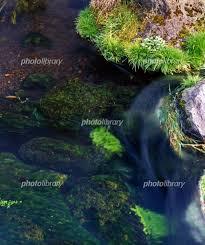 忍野八海の名水 写真素材 [ 479346 ] - フォトライブラリー photolibrary