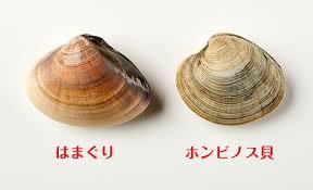 はまぐりとどう違う!? ホンビノス貝の美味しい食べ方ガイド | ほほえみ ...の画像