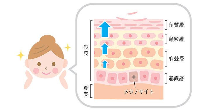 ターンオーバーの乱れを改善・正常化を促進し、シミに効く化粧品は?