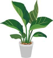 植物に養生するとき