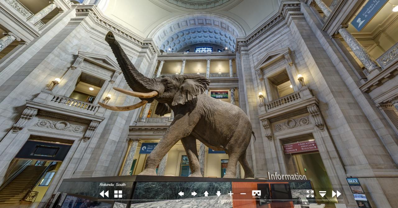 楽しすぎる「スミソニアン国立自然史博物館」バーチャル・ツアー ...