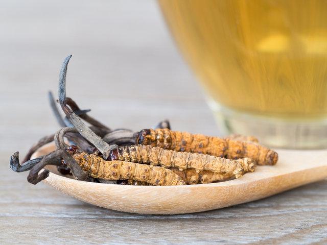 強壮効果のある漢方、冬虫夏草とは?効果効能を解説 - 美活プラザ