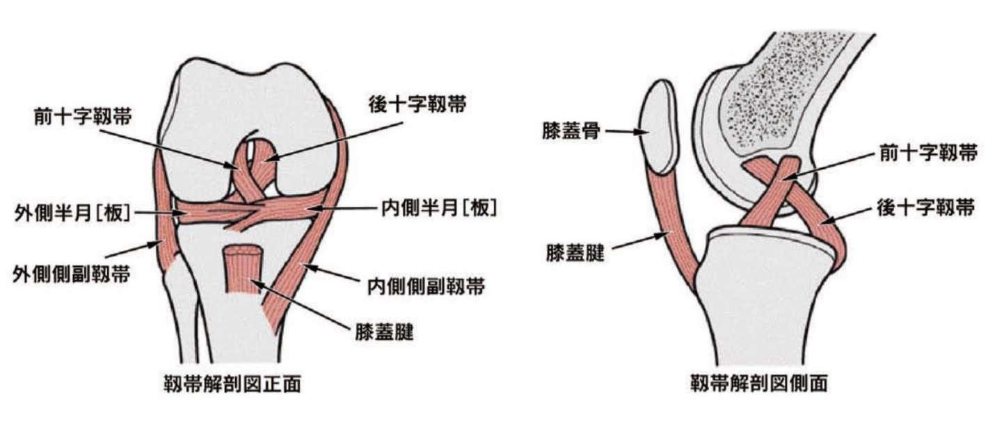 膝前十字靱帯損傷の治療 整形外科 千船病院【大阪市】