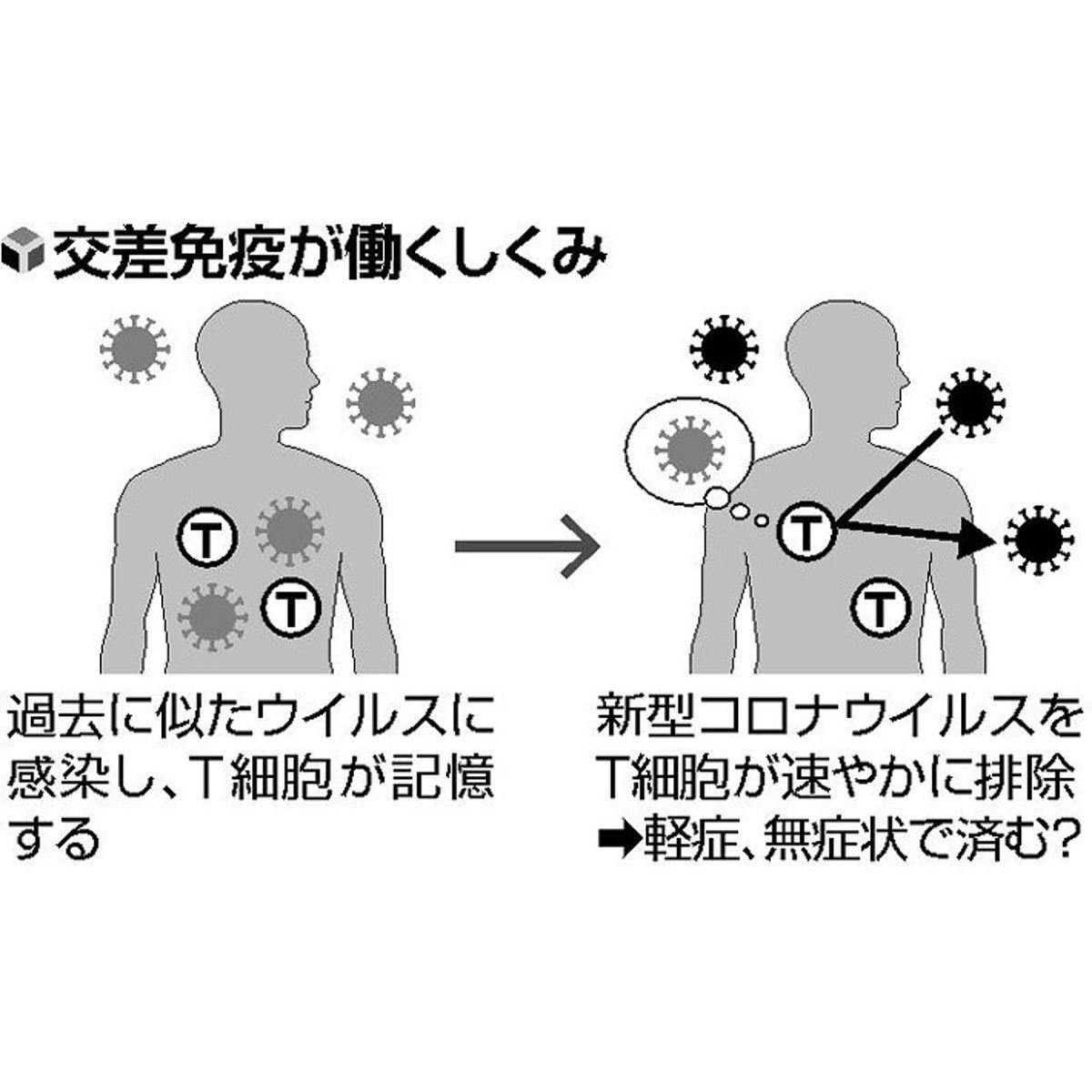 コロナの疑問]症状に差が出る要因は?…過去 類似ウイルス感染か ...