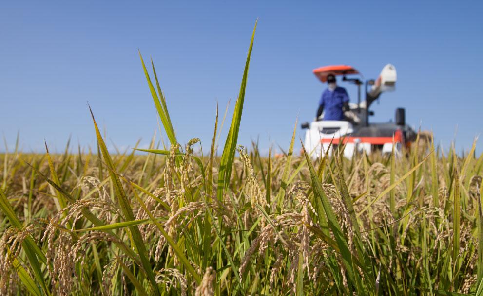 農業法人を設立するメリットは?企業の農業参入から個人農家の法人化まで