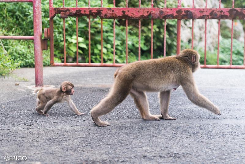 旅先で出会った親子猿♡【伊豆・波勝崎苑】 : 元テレビ編集マンの癒し ...
