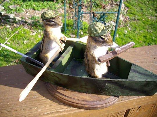 ボートを漕ぐシマリスくん 剥製 - 頭骨・骨格標本・剥製販売 【CORE-BOX】