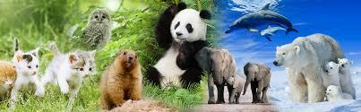 動物・生き物特集   写真素材・ストックフォトのアフロ