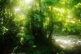 世界遺産『オーストラリアのゴンドワナ雨林』  ラミントン国立公園と ...